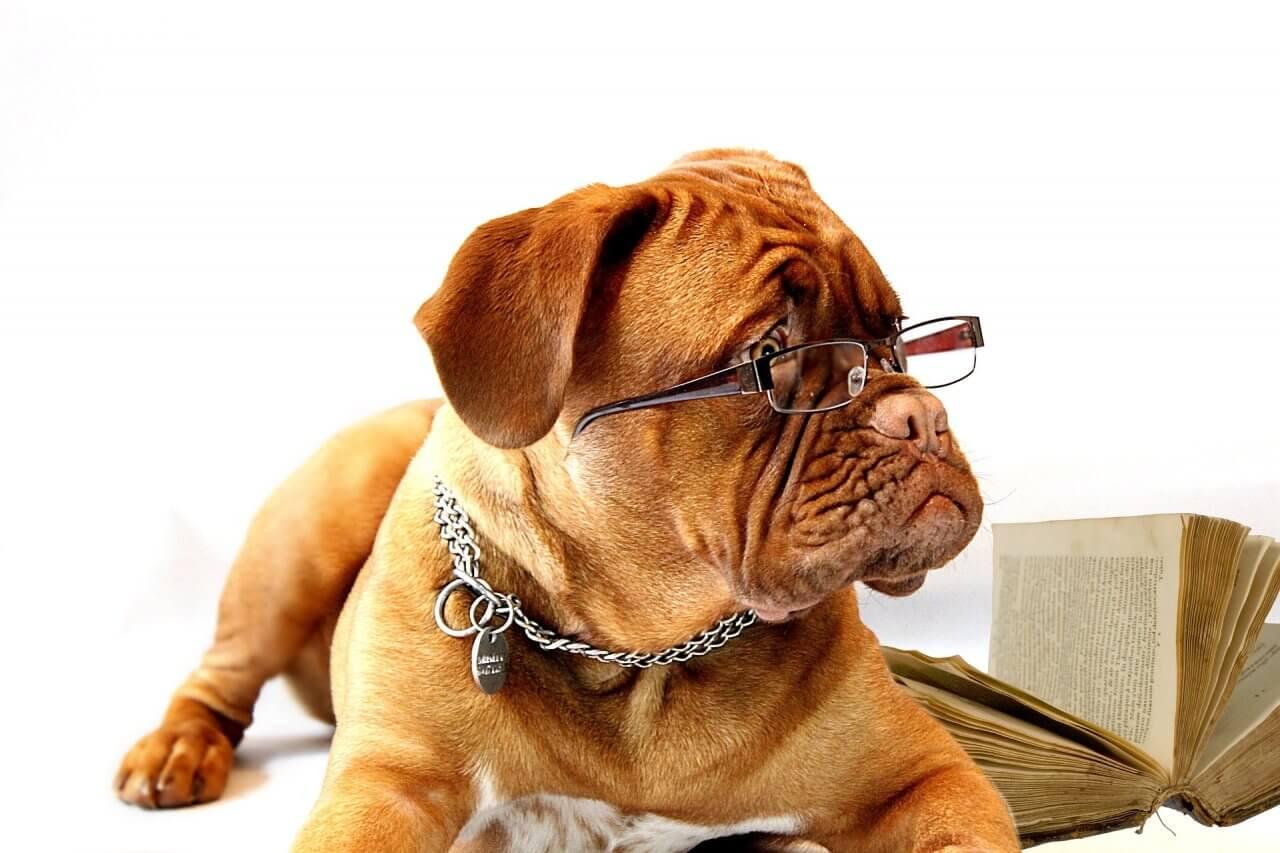 Hund Lesen gefährdet die Dummheit